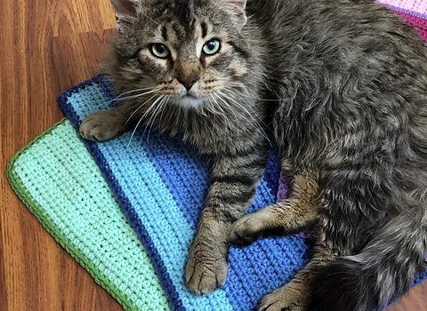 Make A Kitty Blanket To Donate To A Local Animal Shelter